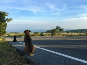 Asphalt Pavement & Dogs